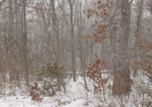 CTforest_winter